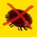kein-varroa