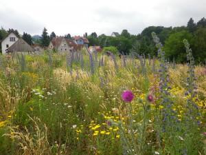 Bienenweide in Ober-Beerbach