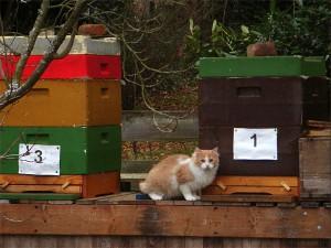"""Ein """"Gast"""" am Bienenvolk"""