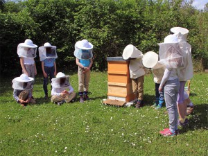 Praxisunterricht im Kurs Bienenhaltung an der Grundschule am Pfaffenberg