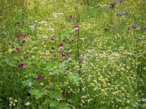 Bienenweide in Modau