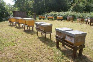 Eröffnung der Schauimkerei Kühkof am 02.09.16: Bienenstand