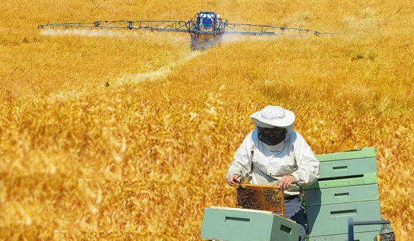 """Vortrag """"Imkerei und moderne Landwirtschaft – (k)ein Widerspruch"""""""