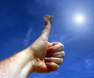 Heute ist ein guter Tag für Bienen