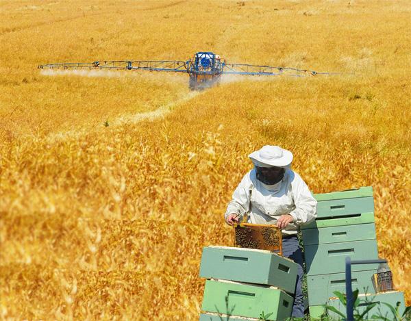 Imkern und moderne Landwirtschaft (k)ein Widerspruch?
